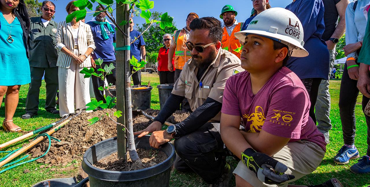 City Plants – Get Free Trees!