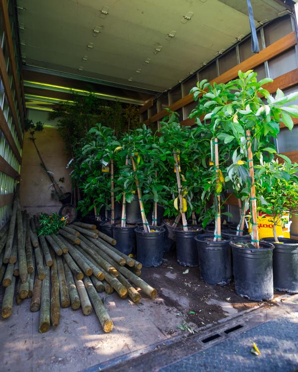 City Plants   Our Programs